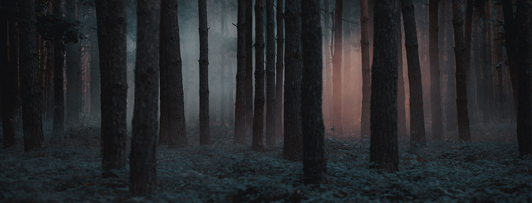 dark trees in a forest with a light in the distance